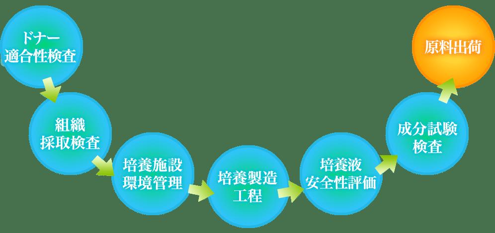 ヒト幹細胞培養液の製造工程